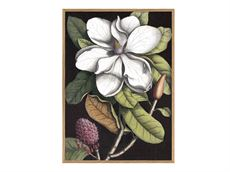 The dybdahl co. white magnolia. 30 40 plakat