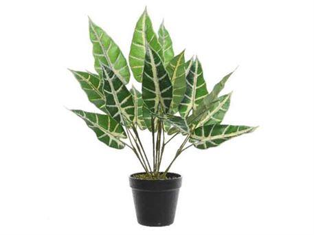 Aloe vera plante pris